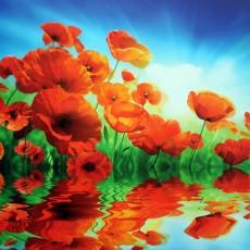Декоративное панно VIP Красные маки 294х260 (12 листов)