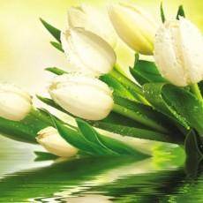 Декоративное панно VIP Белые тюльпаны 294х260 (12 листов)