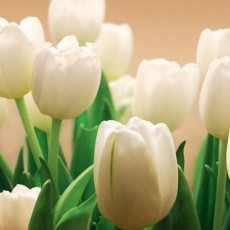 Декоративное панно Белые тюльпаны 294х201см