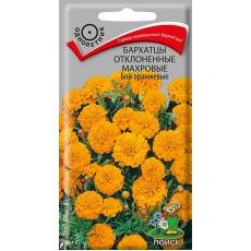 Бархатцы отклоненные махровые Бой оранжевые ( ЦВ)  0,4гр.